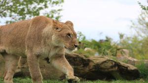 Meilleurs Locations de Vacances Proche Zoo de Beauval
